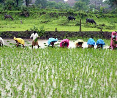 agricultureinnigeria