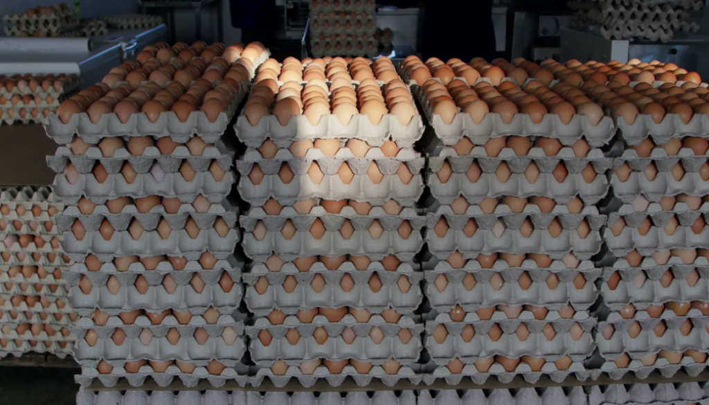 crates-of-fresh-eggs-at-a-poultry-farm_reuf3ywke_thumbnail-full11