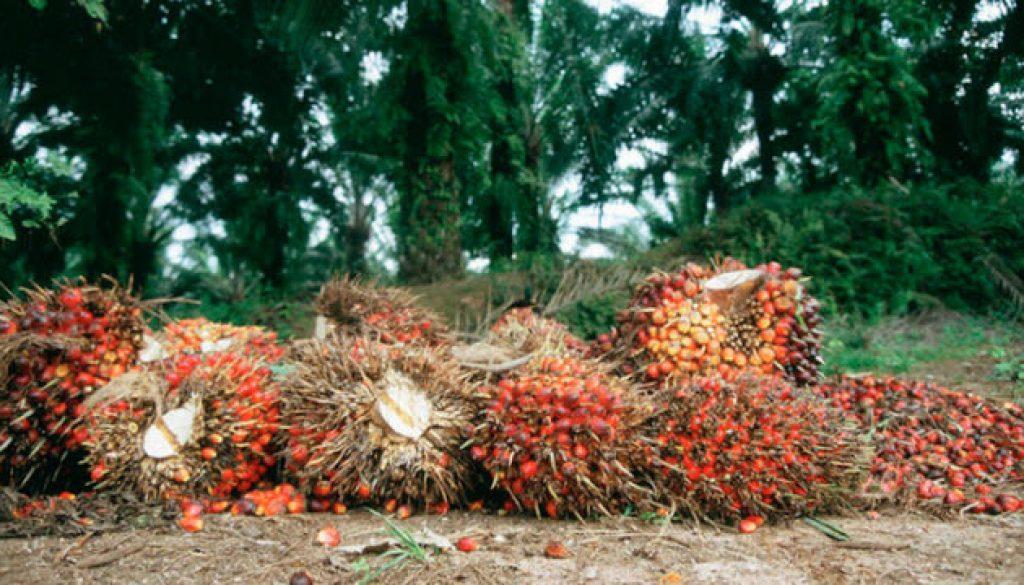oil-palm-plantation