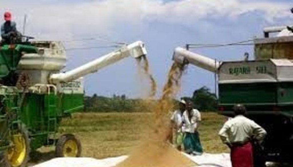 nigeria-records-12m-rice-farmers