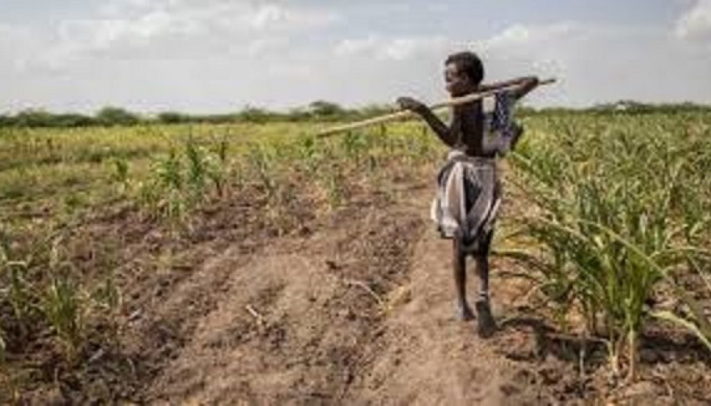 S. Africa farmers seek $220m to mitigate drought
