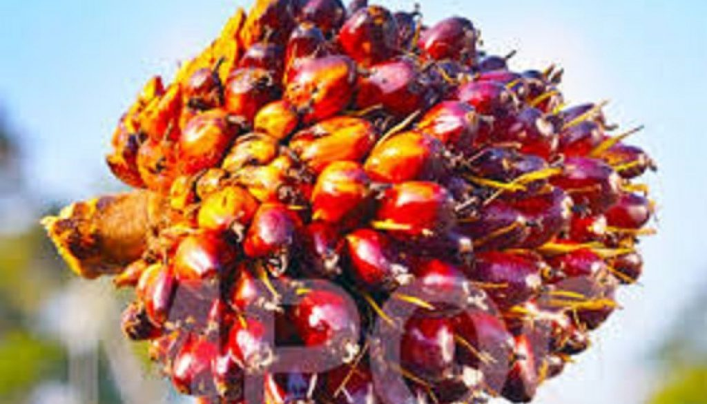 Nigeria spends $500m on palm oil import yearly