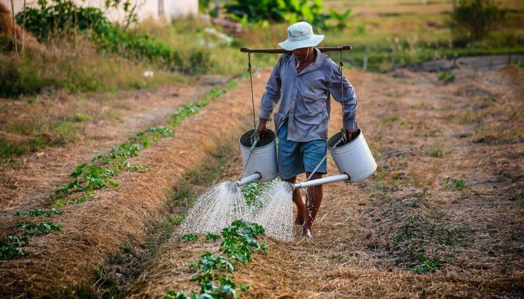 watering-watering-can-man-vietnam-162637