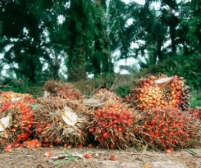 Nigeria seeks to create 4m jobs from oil palm