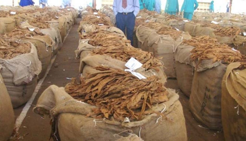Zimbabwe breaks record in tobacco production