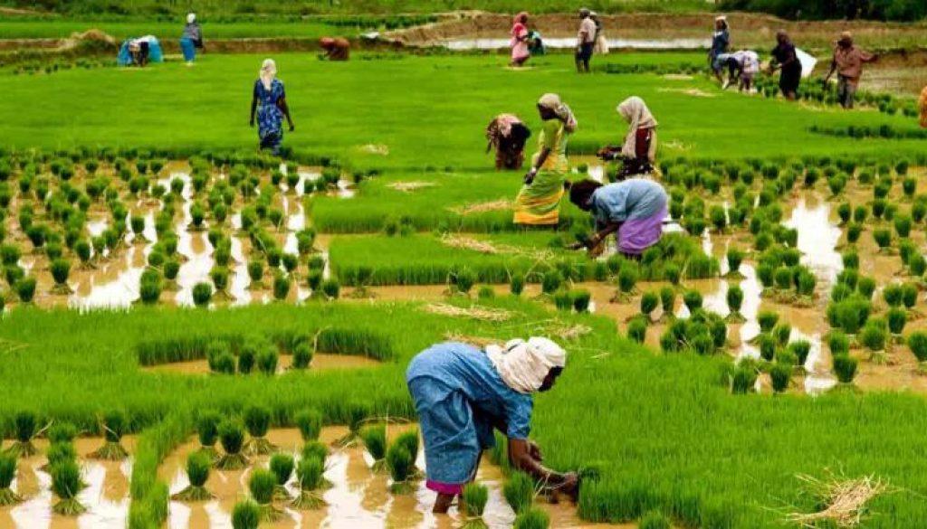 fertiliser-lower-prices