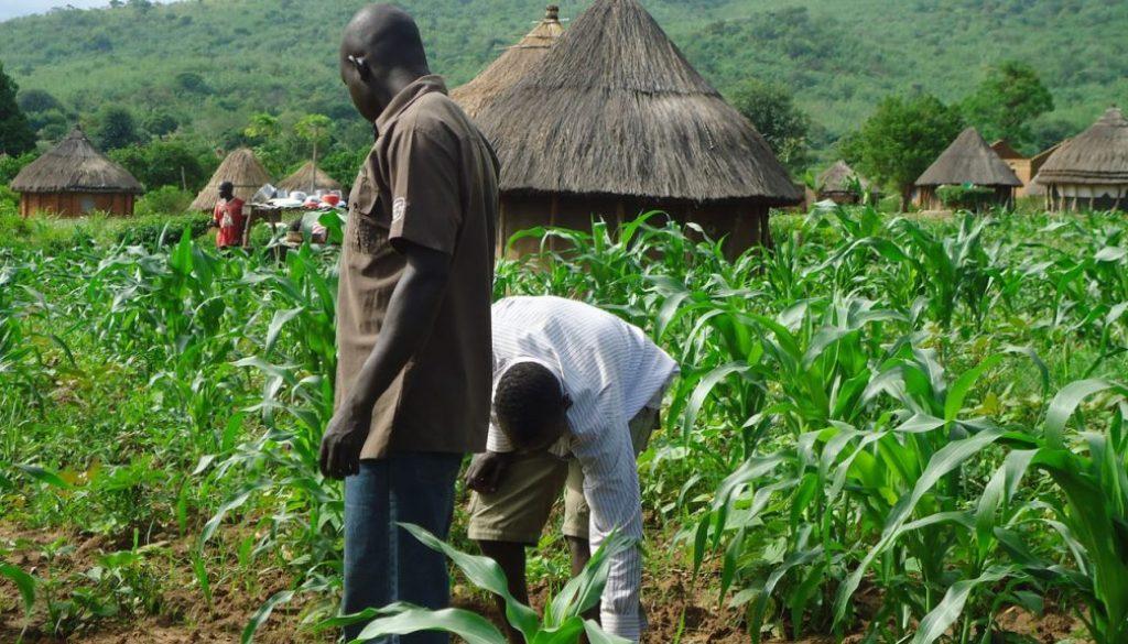 youth-farming