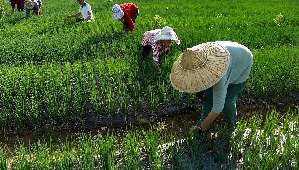 Agriculture-in-China