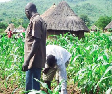 gerian-farmers-are-now-embracing-agricultural-biotechnology.-727x430